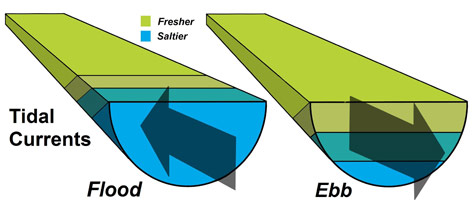 Ebb Tide Diagram
